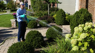 Keep your ornamental beds looking their best with a specialized Spring-Green program