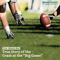turf care for superbowl 2017