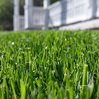 lawn care beginning in the south