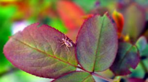 Leaf Eating Insects