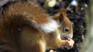 PC_how-to-control-squirrels-squirrel-problems-&-prevention-tips
