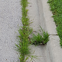 Weeds growing along the street