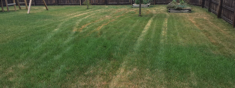mower damage to lawn